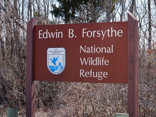 Edwin B. Forsythe  Wildlife Refuge in Barnegat