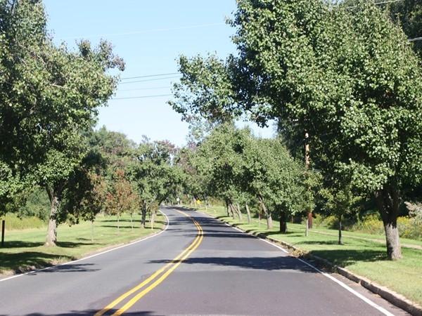 Beautiful tree-lined streets