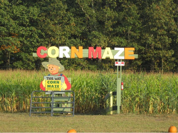 One of Emery's corn mazes