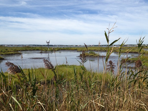 Stunning view of the Barnegat Bay from one of the several miles of trails in this 500 acre park.