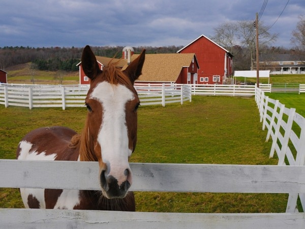 A horse smiles for the camera at Westfall Winery
