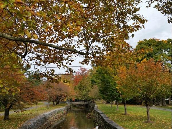 Fall foliage along the Nutley Park creek