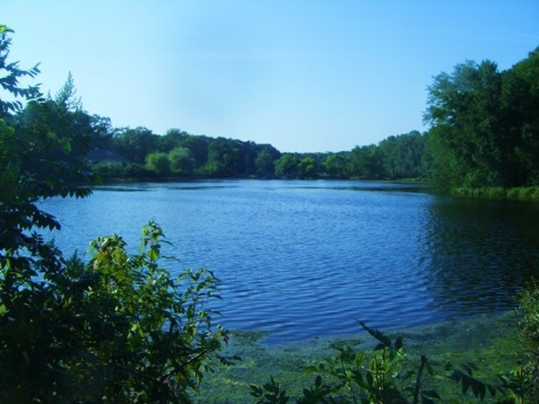 Arbor Lake along Delsea Drive. Situated between Arbor Road and Forest Grove Road
