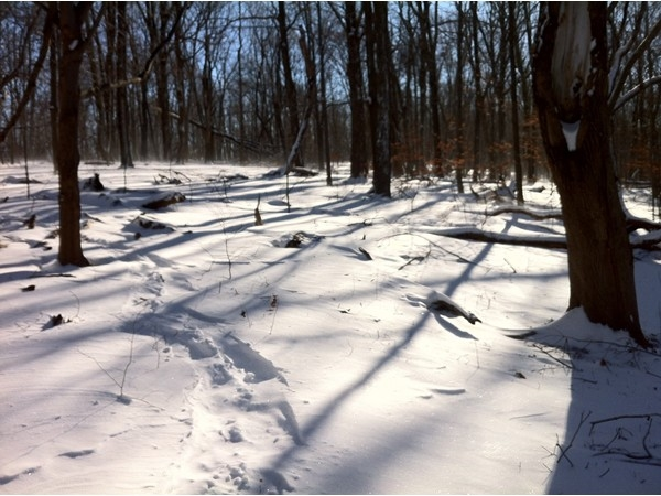 Snow shoe tracks through fresh fallen snow in Green Acres