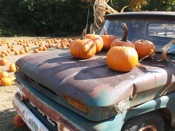 Demarest Farms is a great place to spend a fall day with the family