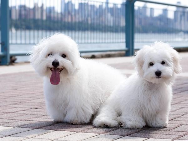 The River Walk is dog heaven