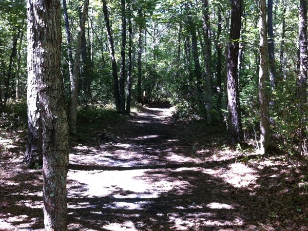Miles of hiking/biking trails through Bass River State Park