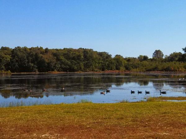 Ducks at Tip Seaman Park