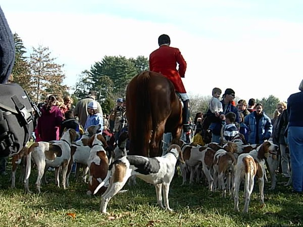 Local fox hunt