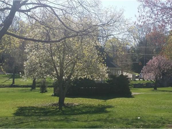 Spring in Demarest