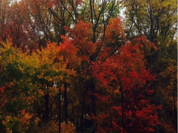 A gorgeous time of year in Monmouth County
