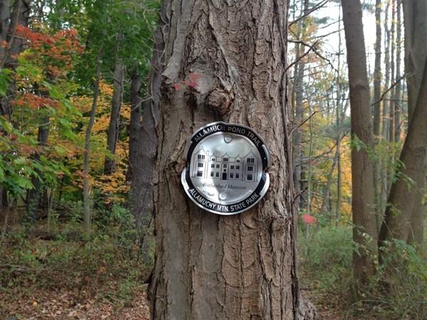 Allamuchy Pond Trail