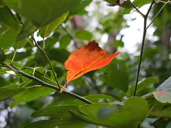 One leaf welcoming the fall. So simple, yet says so much