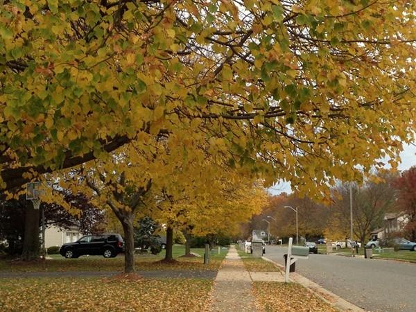 Beautiful fall colors in Manalapan