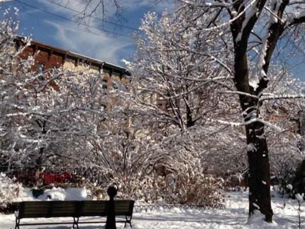 Van Vorst Park, Jersey City - brownstones peaking through the snow