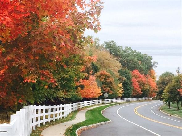 Autumn scene in Basking Ridge