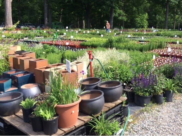 There are over 40,000 Perennials to choose from at Metropolitan Farm. They also sell farm fresh