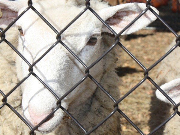 Come visit the sheep, cows, and goats and the Demarest Farms petting zoo