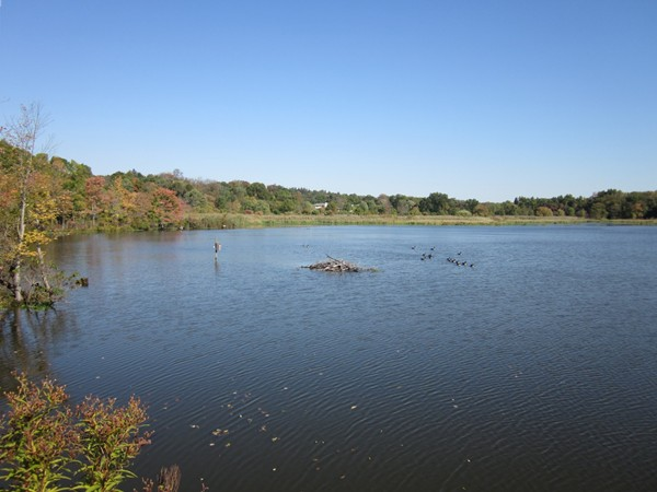 The Celery Farm is a 107 acre freshwater wetland, a Bergen County jewel and bird lover's paradise