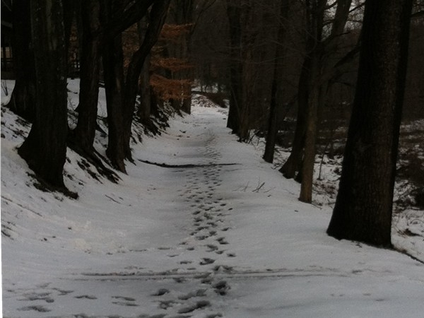 Snowy walking paths in Ramapo River Reserve