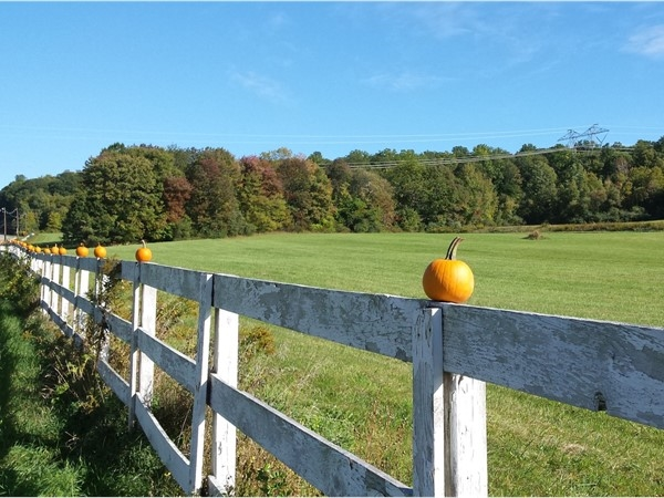 The famous parade of pumpkins on a fence as you leave Long Valley