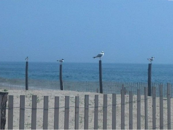 If you live in North Brunswick, you are only 30 minutes from the Jersey Shore and these sea gulls