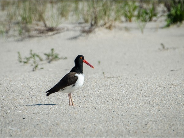 Birding on the beach