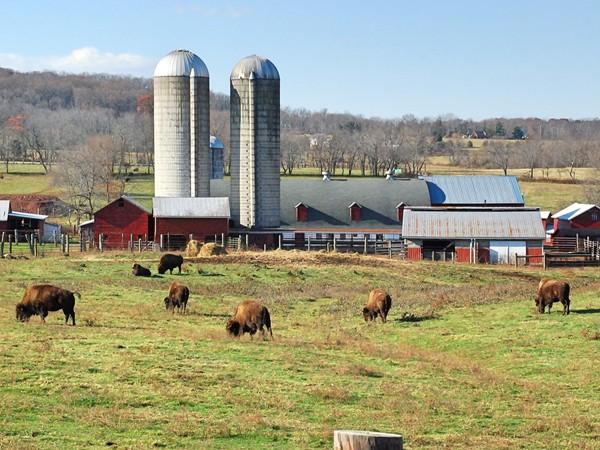 Readington River Buffalo Farm on Route 523