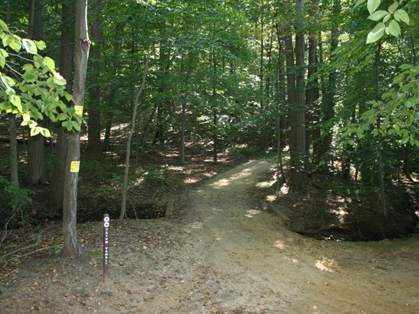 Tatum Park Trails