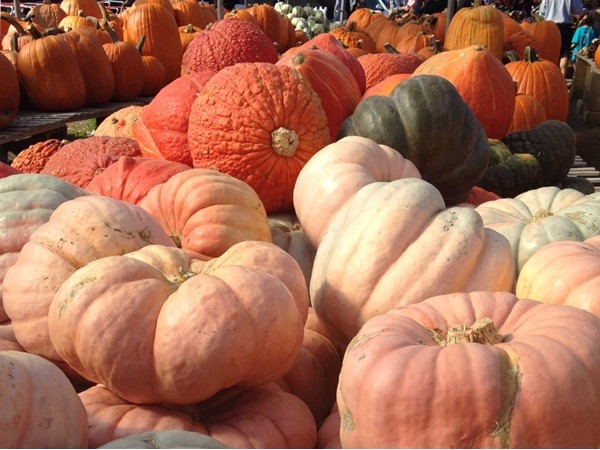 Secor Farms was packed today. There were hayrides, pumpkins, apple cider and all the fall treats