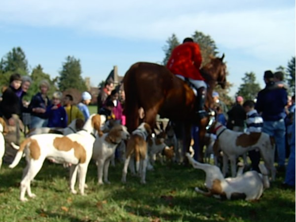 Playful hounds before fox hunt