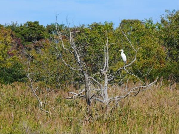 Stone Harbor Bird Sanctuary