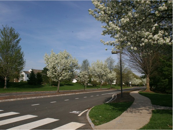 Spring Ridge features an extensive sidewalk system and a dedicated bike lane