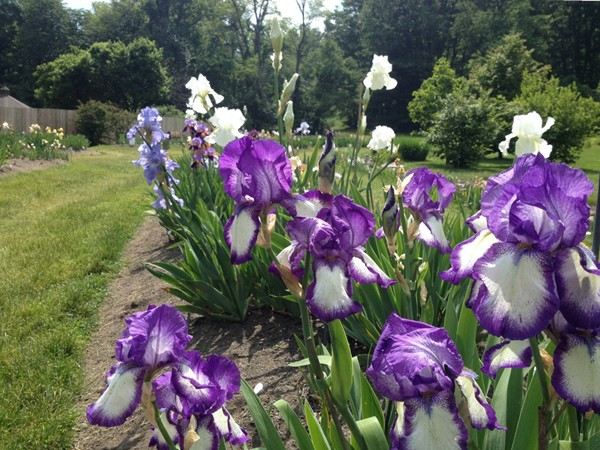 Enjoy a relaxing day at Presby Memorial Iris Gardens watching people draw, take pictures & reflect