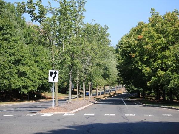 Tree lined streets of Spring Ridge Development
