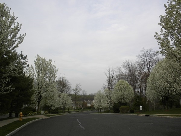 Amherst Drive entry to community.