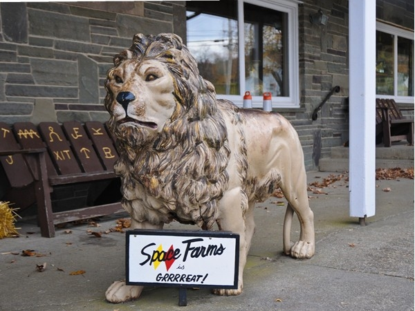 A lion greets you at Space Farms