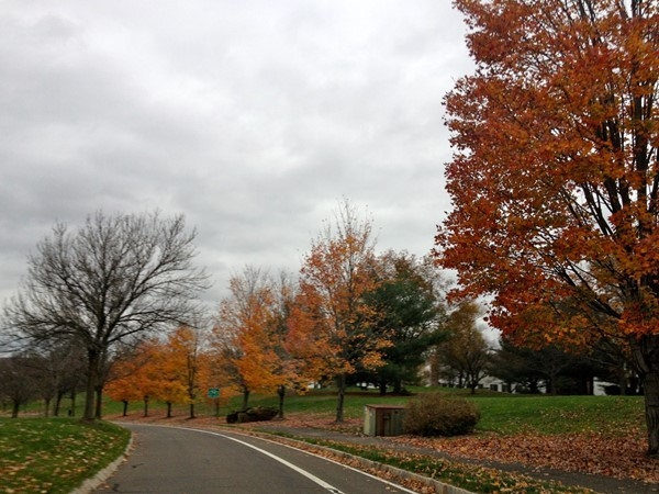 Another beautiful view of the fall season in Spring Ridge community