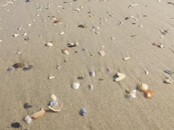 Tiny shells along the seashore