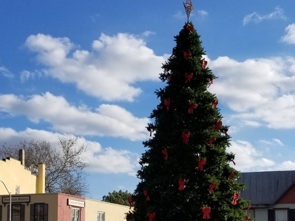 The tree is ready for the tree lighting ceremony on the 7th in downtown Mount Holly