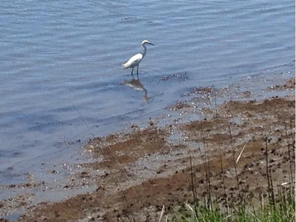 Fishing along the shoreline