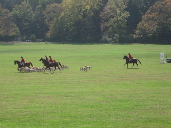 A special demonstration of the Essex Fox Hounds at Natirar.