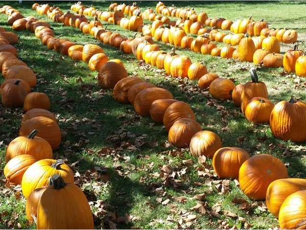Metuchen loves dressing up for fall!