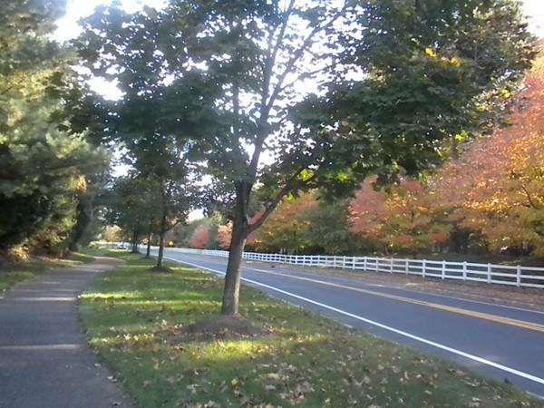 Allen Rd Walking Paths in the Hills - Fall foliage is breathtaking