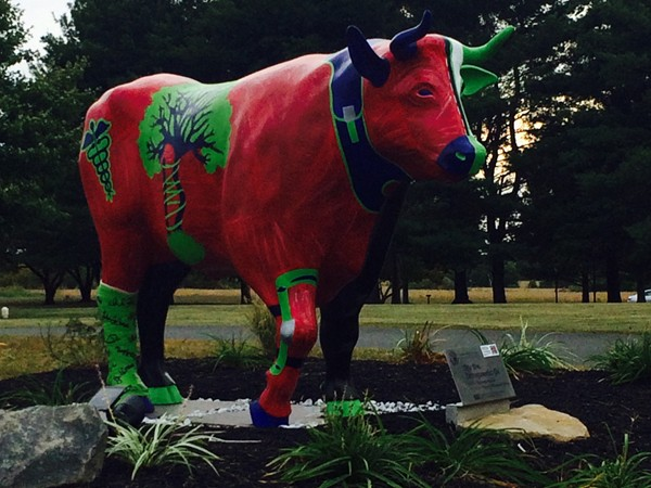 """Hopewell Valley Arts Council  """"The Stampede Outdoor Exhibit"""" Olly the Orthopedic Ox by Eliza Keating"""