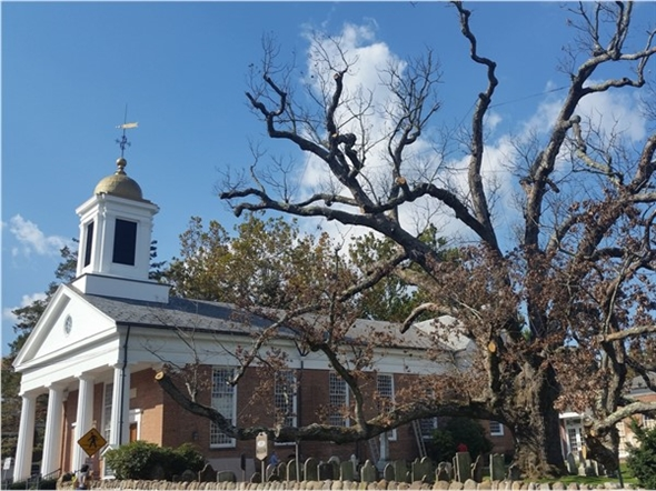 As of early fall 2016, the 600-year old oak tree and town icon is close to the end of its long life