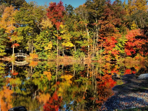 White's Pond,  Fall 2013