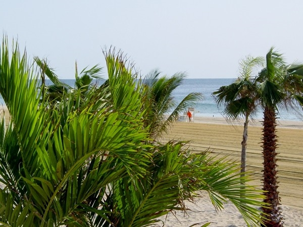 The tropical feel of the Long Branch Beach