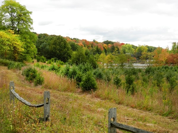 It's hard to believe this is right in busy Morris County! Mid-town access plus pastoral beauty