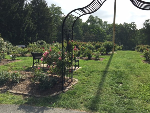 View of the Brookdale Rose Garden
